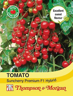 Thompson & Morgan - Vegetables - Tomato Suncherry Premium F1 Hybrid - 6 Seed