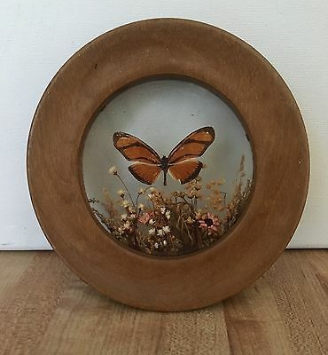 Vintage Round Wood Frame Brazil Dried Flowers Butterfly Wall Hanging
