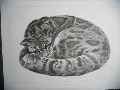GARY HODGES ~=**SERENITY** ~Clouded Leopard ~NEW Signed Limited Edition Print