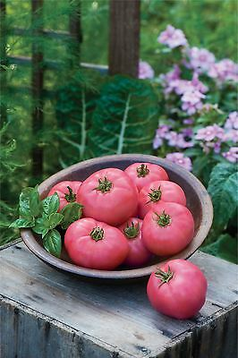Vegetable - Tomato - Big Pink - 50 Seeds - Large