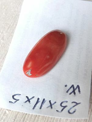 Red Coral,aka coral,rough coral,意大利原紅珊瑚,イタリアの生の赤珊瑚,Italian cabochon 25x11mm