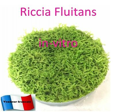 Riccia fluitans culture in-vitro portion  << NANO - Aquascaping - Crevette  >>