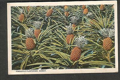 Hawaii unmailed color post card Pineapple Plantation