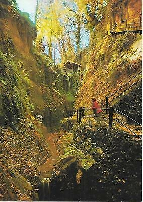 Shanklin Chine , Isle of Wight. Unposted Postcard