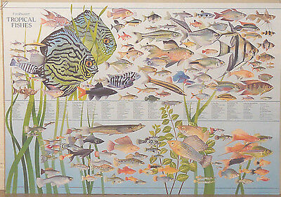 (Prl) 1987 Tropical Fisches Pesci Tropicali Vintage Affiche Art Print Poster
