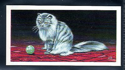 BROOKE BOND (SOUTH AFRICAN) OUR PETS 1967 No.10 THE PERSIAN CAT