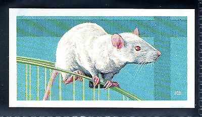 BROOKE BOND (SOUTH AFRICAN) OUR PETS 1967 No.20 MICE