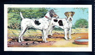 BROOKE BOND (SOUTH AFRICAN) OUR PETS 1967 No.4 THE FOX TERRIER