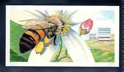 BROOKE BOND (SOUTH AFRICAN) OUR PETS 1967 No.40 BEES