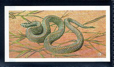 BROOKE BOND (SOUTH AFRICAN) OUR PETS 1967 No.49 THE HOUSE SNAKE