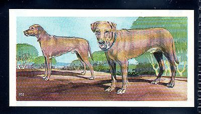 BROOKE BOND (SOUTH AFRICAN) OUR PETS 1967 No.5 THE RIDGEBACK
