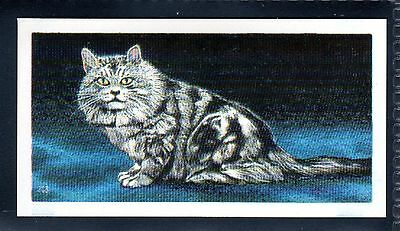 BROOKE BOND (SOUTH AFRICAN) OUR PETS 1967 No.9 THE TABBY CAT
