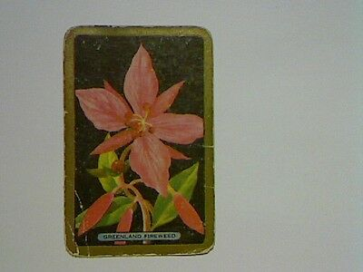 "1 Single Swap/Playing Card - Coles Named Series ""Greenland Fireweed"""