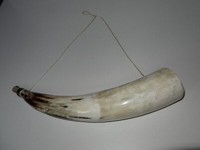 Wall Hung Viking Cow Horn Drinking Vessel Horn