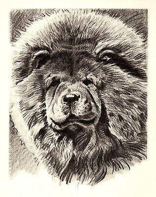 1946 Antique Chow Chow Dog Print Beautiful Animal Gallery Wall Art 1883