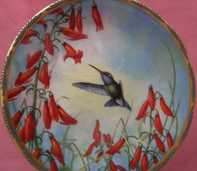 Broad-Billed Hummingbird And Penstemon Plate Cyndi Nelson Pickard Gems Of Nature
