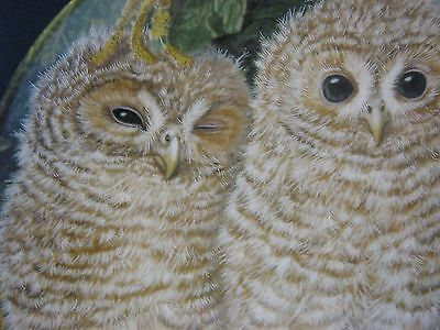 Wedgwood The Baby Owls Dick Twinney Tawny Owl Chicks
