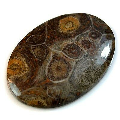 65Ct HUGE Natural Moroccan Fossil Coral (45mm X 32mm) Cabochon