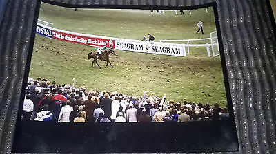 Grand National Photo : West Tip