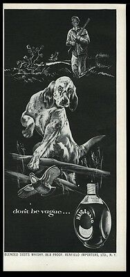 1953 English Setter quail hunting art Haig & Haig Scotch whisky vintage print ad