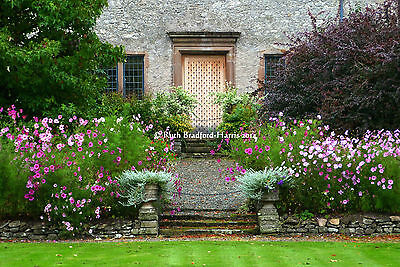 Cotswold Garden Art Photograph Mounted Print 10 mount colours Greetings Cards
