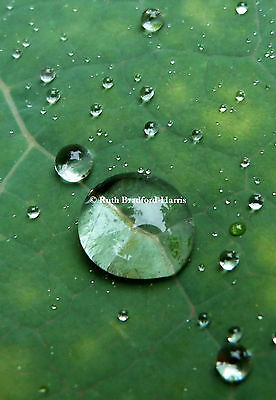 Raindrops Reflections Leaf Photograph Print Mounted (10 colours) Greetings Cards