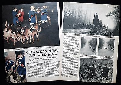 Wild Boar Hunting Rallye Bretagne Hunt Chase Brittany France Photo Article 1954