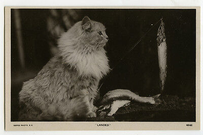 c 1910 Antique British LONG HAIRED CAT w/ Fish on fishing pole photo postcard