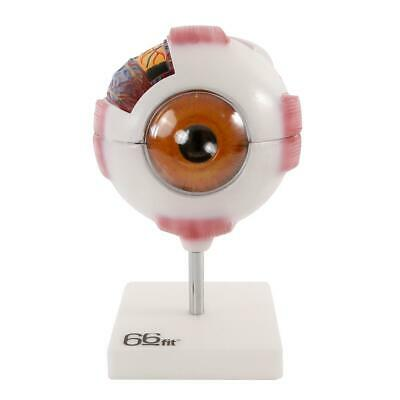 66fit Giant Eye Model - White - Medical Training Aid