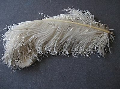 Antique Huge Off White With Grey Accents Feather For Millinery Or Repurpose