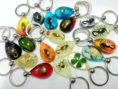 wholesale 50pc mix insect spider clover ,scorpion ,beetle mix key-chains