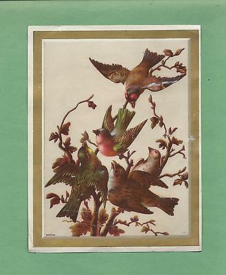 Lovely BIRDS On A/S BUFFORD Beautiful LION COFFEE Victorian Trade Card