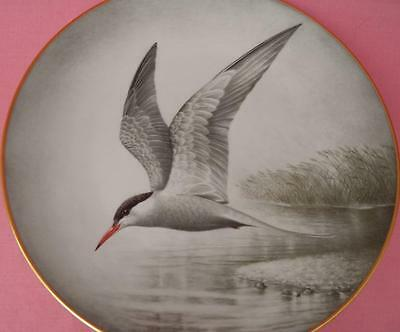 Haviland Limoges Common Tern Plate Wilhelm Buehler Wild Birds Of The World