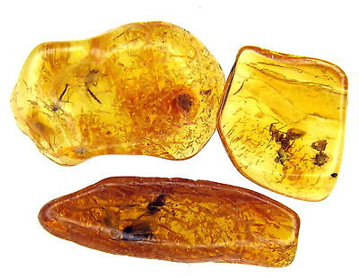 3 Amber Stones With Fossil Insects Inclusions - 45 Millions Years Old!!! (3640 )
