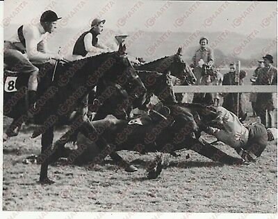 1959 COTSWOLD CHASE - Horse Race - Jockey and horse falling down *Photo 18x13