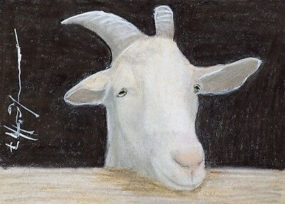 ACEO original pastel drawing billy goat by Anna Hoff