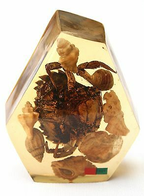Portuguese Paperweight With Crab  And Shells