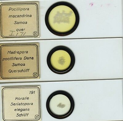 3 Coral Microscope Slides by I.D. Moller