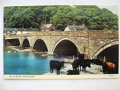Machynlleth Montgomery Dovey Bridge Dennis 1979 M.2308 Cows Grazing by River