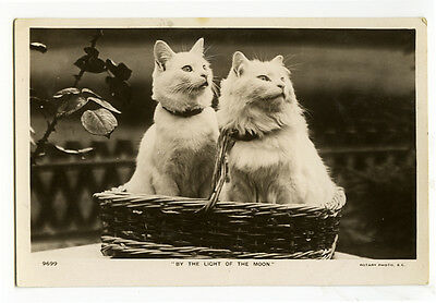 c 1909 Antique British White CATS IN A BASKET vintage photo postcard