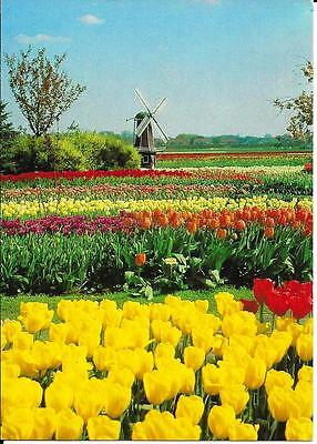 Holland in Bloom - Posted Postcard
