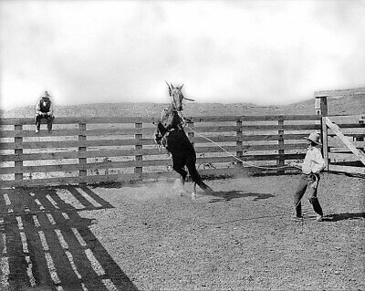 Old West Cowboy & Wild Bronco Texas Ranch 11x14 Silver Halide Photo Print