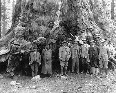 Theodore Roosevelt & Grizzly Giant Tree Silver Halide Photo Print