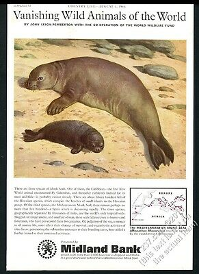 1966 monk seal and pup cute art Midland Bank vintage print ad