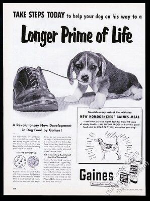 1954 Beagle puppy photo Gaines Dog Meal food vintage print ad