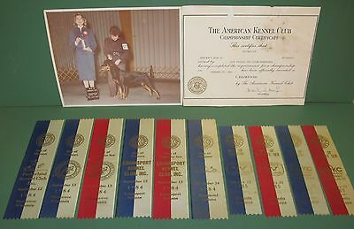 Lot of 12 Vintage American Kennel Club Dog Show Collectibles Rottweiler Ribbons