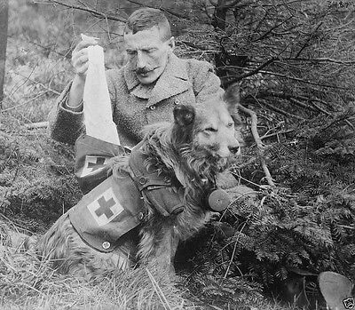 British soldier retrieving bandages from Red Cross dog World War I 8x10 Photo