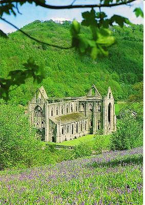 Tintern Abbey - From the Bluebell Wood - Posted Postcard