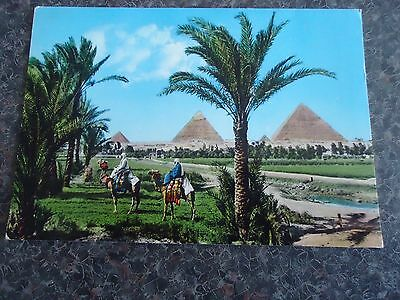 Postcard The Gisa Pyramid Group  Cairo Egypt 1970