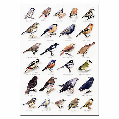 Garden Birds A5 Identification Card Chart Postcard
